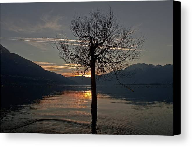 Sun Canvas Print featuring the photograph Wintertree In The Evening by Joana Kruse