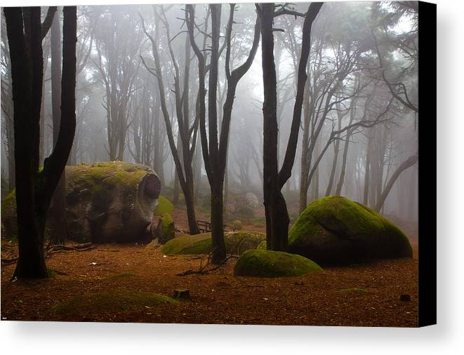 Forest Canvas Print featuring the photograph Wonderland by Jorge Maia