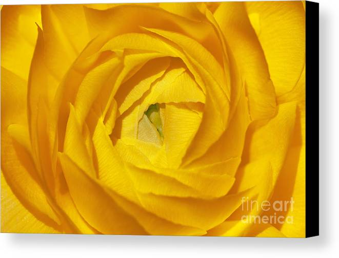 Bronstein Canvas Print featuring the photograph Yellow Beauty by Sandra Bronstein