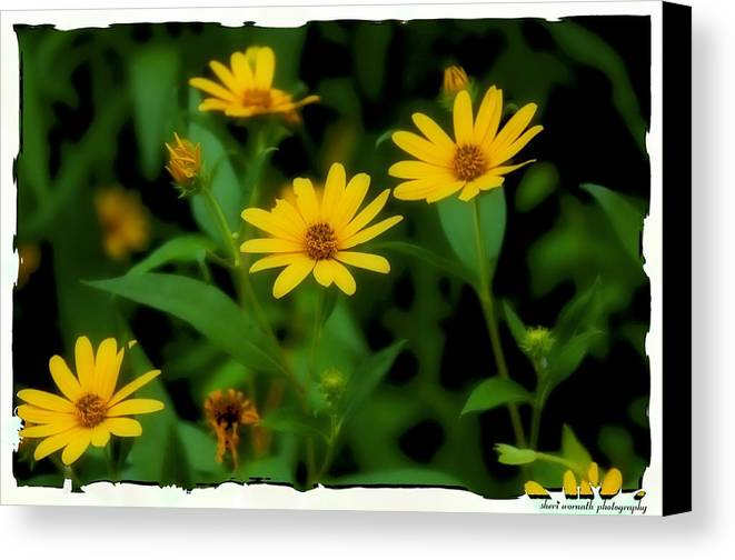 Daisies Canvas Print featuring the photograph Yellow N Green by Sheri Bartoszek