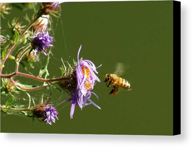 Bee Canvas Print featuring the photograph 091409-122 by Mike Davis