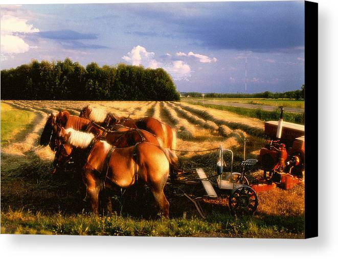Harvest Canvas Print featuring the photograph Amish Hay Rig by Roger Soule