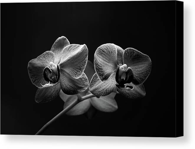 Flower Canvas Print featuring the photograph Black And White Orchids by Tom Bonhardt