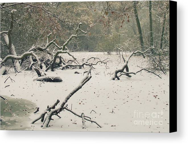 Countryside Canvas Print featuring the photograph Frozen Fallen by Andy Smy