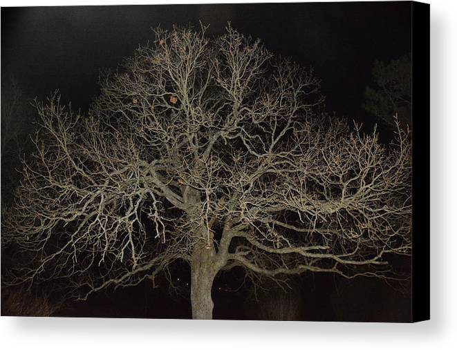 Trees Canvas Print featuring the photograph Ghostly Tree by Mike Fairchild