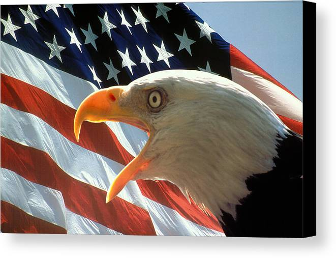Bald Eagle Canvas Print featuring the digital art Live Free Or Die by Carl Purcell