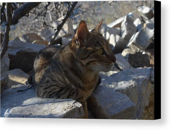 Himalayas Canvas Print featuring the photograph Phoelix by Debrah Huber