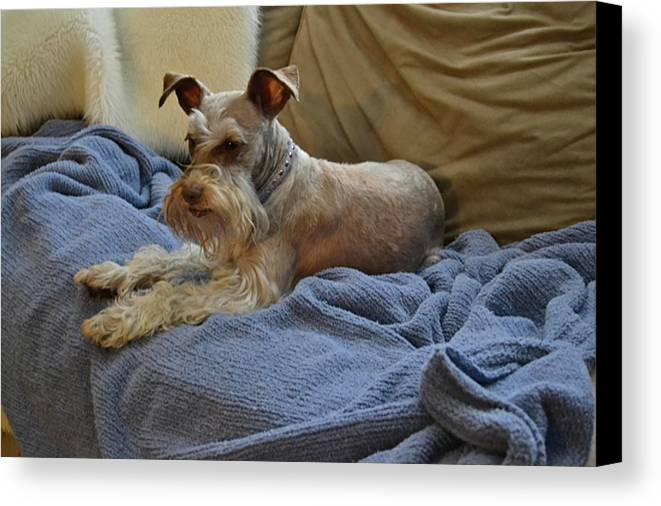 Dog Canvas Print featuring the photograph Pretty Puppy by Carol Bradley