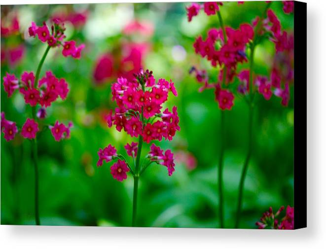 Floral Canvas Print featuring the photograph Purple Flowers by Paul Kloschinsky