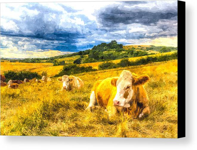 Cows Canvas Print featuring the photograph Resting Cows Art by David Pyatt
