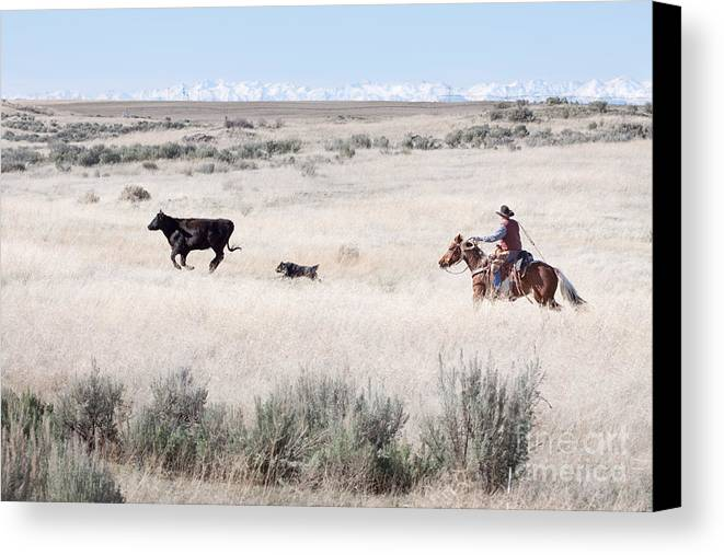 Cowboy Canvas Print featuring the photograph Round Up by Cindy Singleton