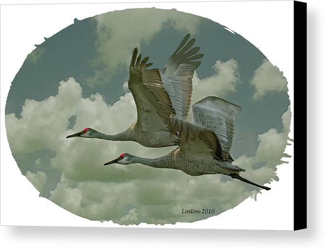 Sandhill Crane Canvas Print featuring the digital art Sandhill Crane Pair by Larry Linton