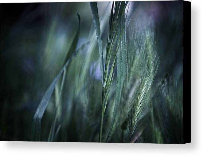 Landscape Canvas Print featuring the photograph Spring Grass Emerging by Sheryl Karas