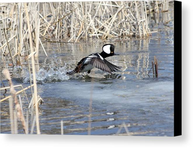 Hodded Canvas Print featuring the photograph Take Off by Lori Tordsen