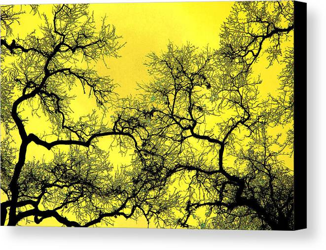 Digital Art Canvas Print featuring the photograph Tree Fantasy 18 by Lee Santa