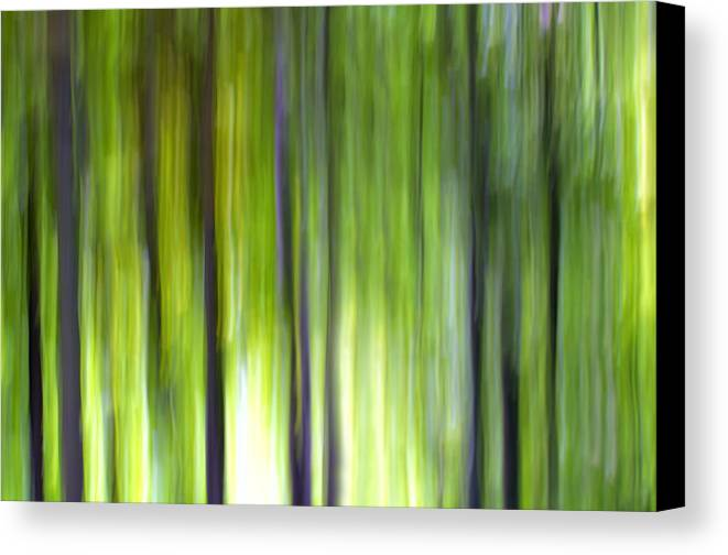 Trees Canvas Print featuring the photograph Trees by Silke Magino