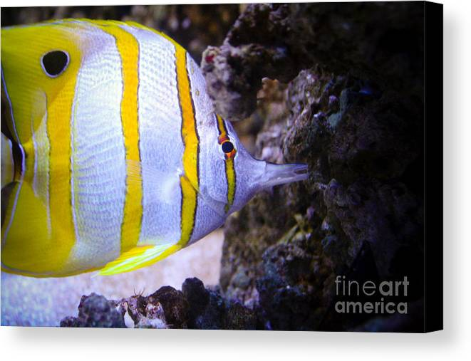 Canvas Print featuring the photograph Tropical Fish by Brenton Woodruff