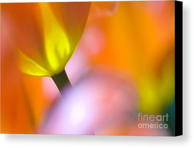 Tulips Canvas Print featuring the photograph Tulips by Silke Magino