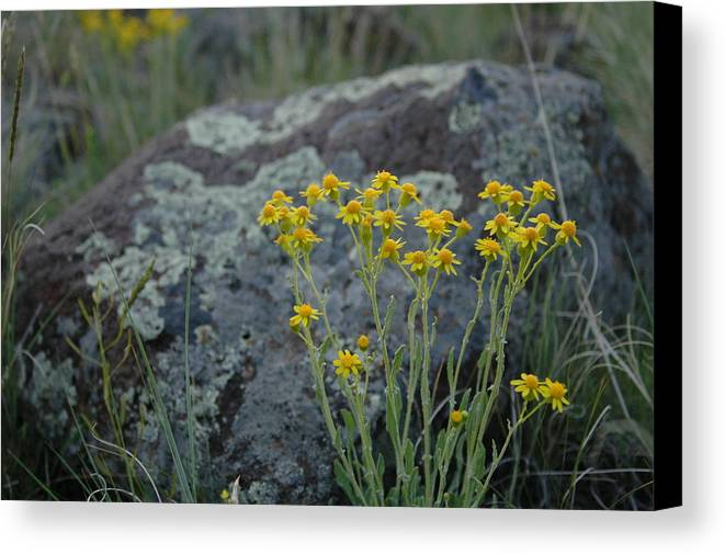 Flowers Canvas Print featuring the photograph Untitled by Kathy Schumann