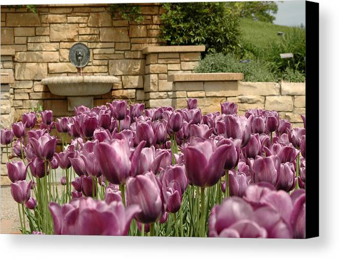 Flora Canvas Print featuring the photograph Untitled by Kathy Schumann