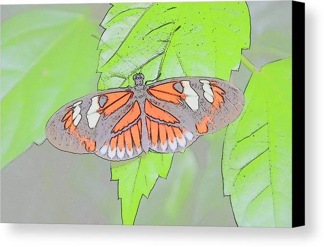 Butterfly Canvas Print featuring the digital art Butterfly by Robert Nelson