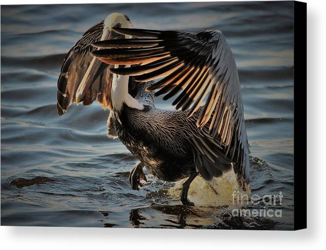 Pelican Canvas Print featuring the photograph Let There Be Light by Paulette Thomas