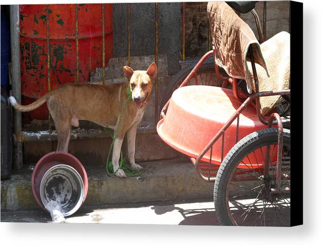 Photographer Canvas Print featuring the photograph Woof by Jez C Self