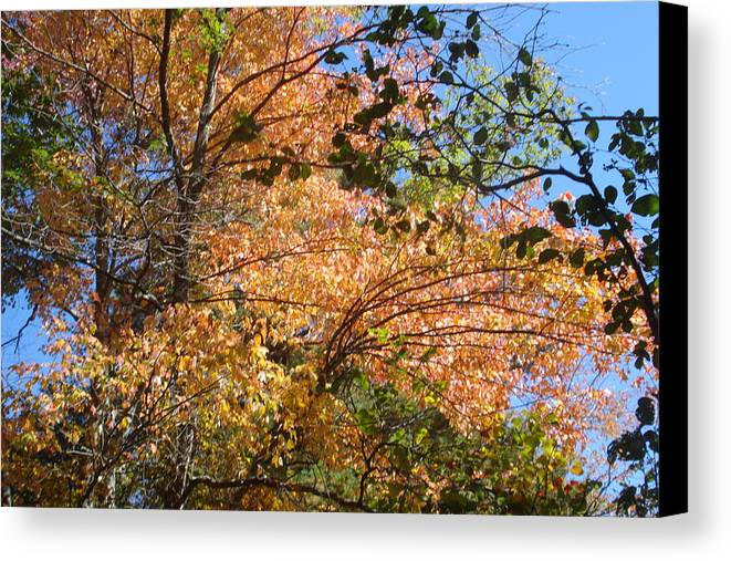 Landscape Canvas Print featuring the photograph Autumn In Ma by Victoria Wang