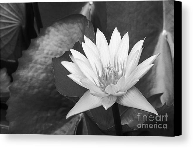 Art Medium Canvas Print featuring the photograph Water Lily by Bill Brennan - Printscapes