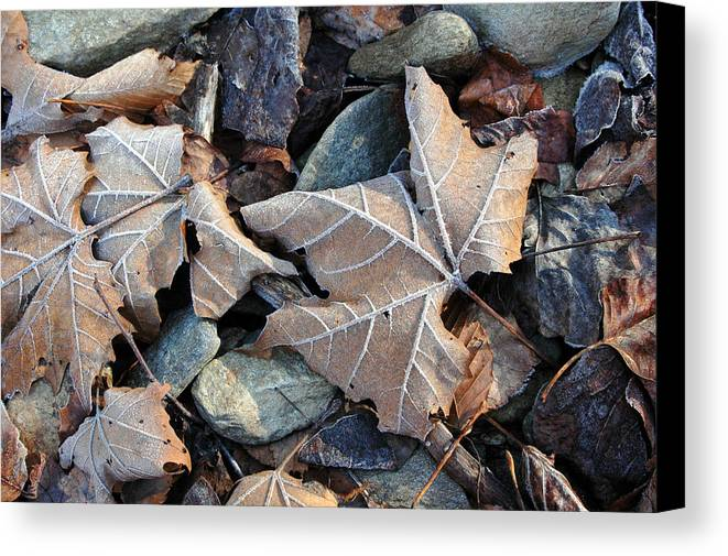Leaf Canvas Print featuring the photograph Untitled by Kathy Schumann