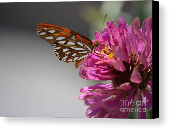 Gulf Fritillary Butterfly Prints Canvas Print featuring the photograph Gulf Fritillary Butterfly by Ruth Housley