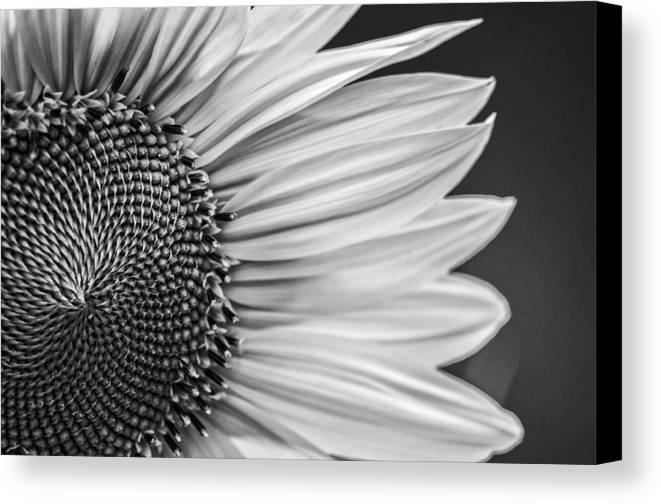 Agriculture Canvas Print featuring the photograph Sunflower by Paulo Goncalves