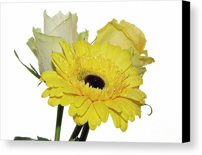 Flowers Canvas Print featuring the photograph Three Flowers by Elvira Ladocki