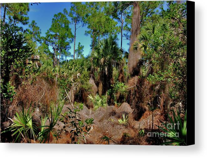 Canvas Print featuring the photograph 55- Everglades Afternoon by Joseph Keane