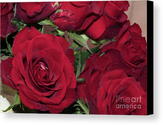 Flowers Canvas Print featuring the photograph Red Roses by Elvira Ladocki