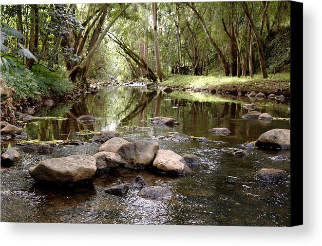 Nature Canvas Print featuring the photograph Untitled by Kathy Schumann