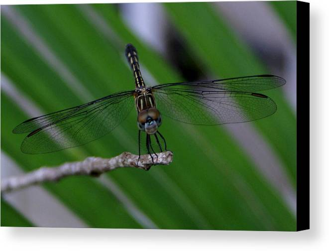 Dragonfly Canvas Print featuring the photograph A Dragonfly Smile by Debbie May