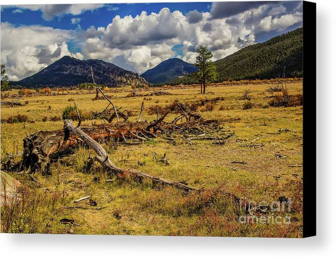 Jon Burch Canvas Print featuring the photograph A Long Life by Jon Burch Photography