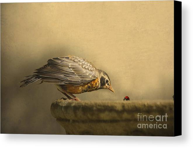 Bird Canvas Print featuring the photograph A New Day by Jan Piller