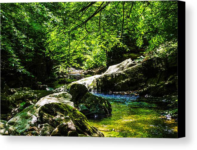 Nature Canvas Print featuring the photograph A Relaxing Place To Be by Gerald Kloss