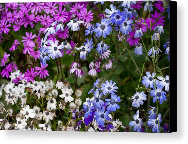 Spring Canvas Print featuring the photograph A Spring Gathering by Karen LeGeyt