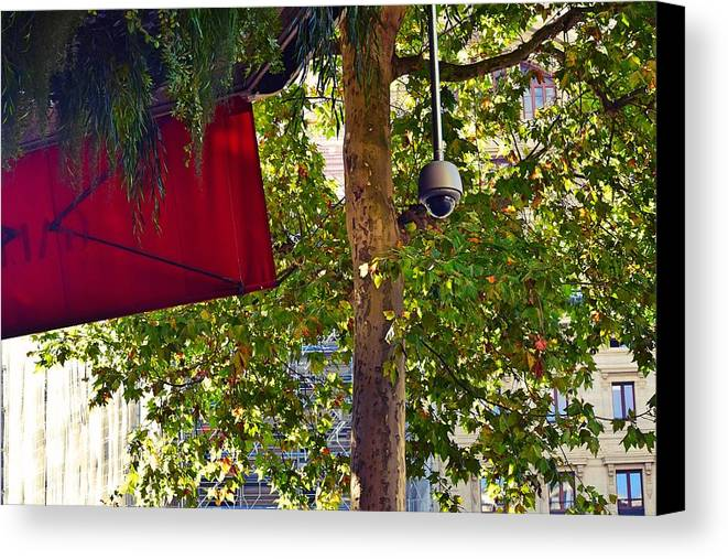 Tree Canvas Print featuring the photograph A Touch Of Red by Valerie Dauce