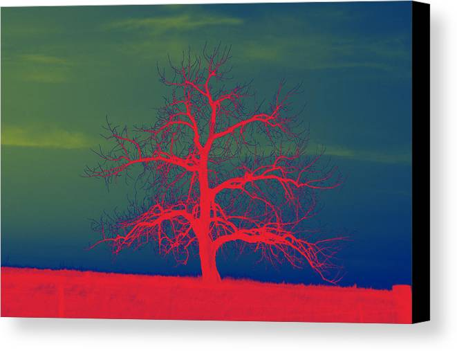Abstract Canvas Print featuring the photograph Abstract Single Tree Red-blue-green by Mike Loudermilk