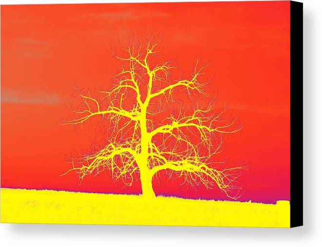 Abstract Canvas Print featuring the photograph Abstract Single Tree Yellow-orange by Mike Loudermilk