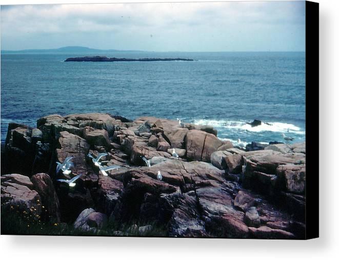Acadia National Park Canvas Print featuring the photograph Acadia Park Maine Coast by Ron Swonger
