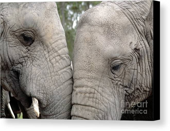 African Elephant Canvas Print featuring the photograph African Elephants by Neil Overy