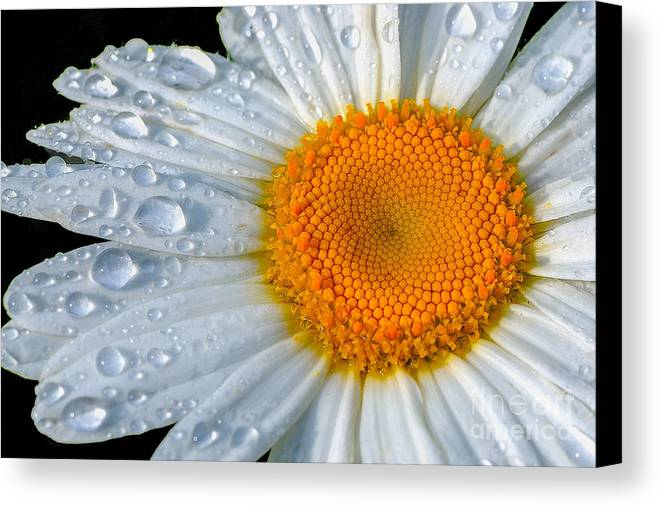 Flowers Canvas Print featuring the photograph After The Rain by Neil Doren