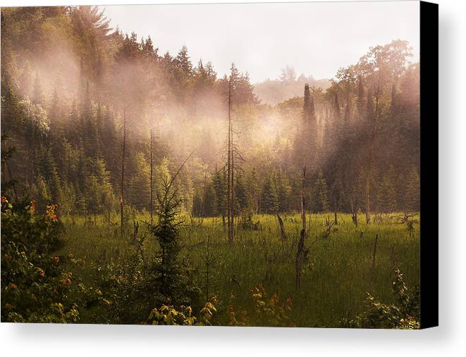 Algonquin Park Canvas Print featuring the photograph Afternoon Mist by Linda McRae