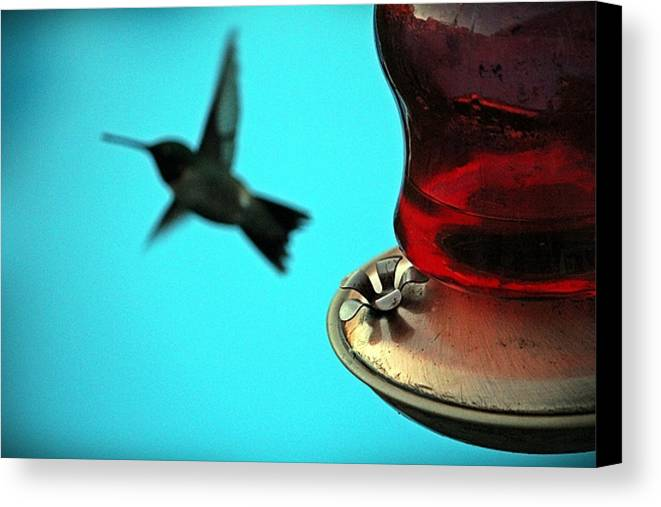 Hummingbird Canvas Print featuring the photograph Almost Got Him by Gene Gorham