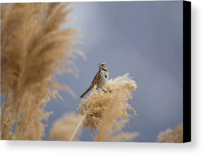 Farmington Bay Canvas Print featuring the photograph And You Are? by David F Hunter